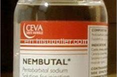 donde puedo comprar Nembutal,