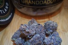where to buy Grand Daddy Purple online at caliweedshop.us